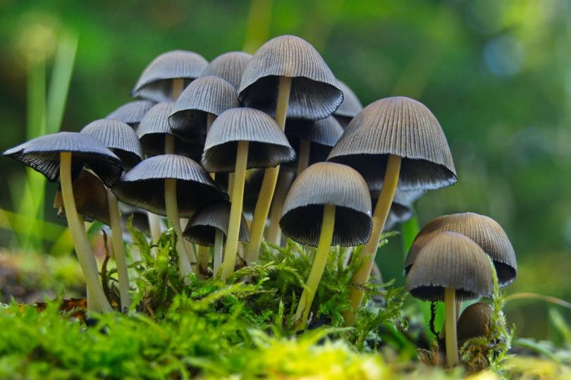 Галлюциногенные грибы узаконили в США, как прорывное средство от депрессии
