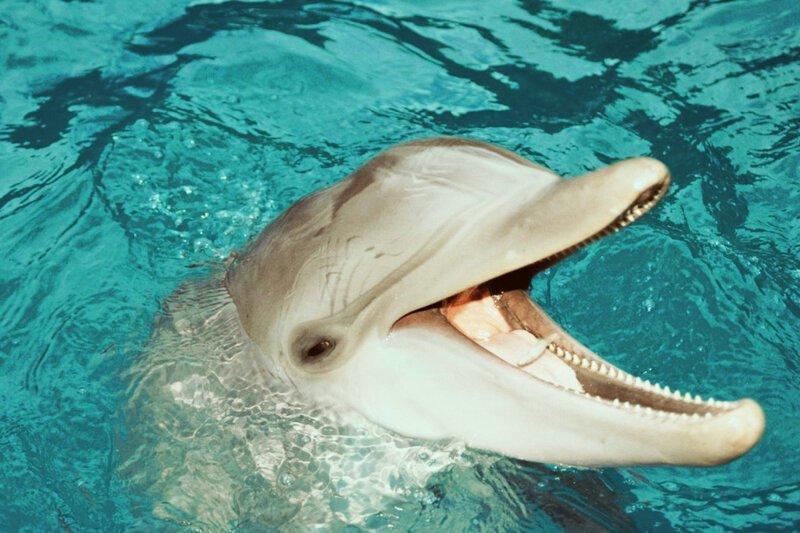 Откуда дельфины и киты получают пресную воду?