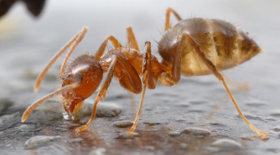 Список странных видов муравьев, существующих в мире