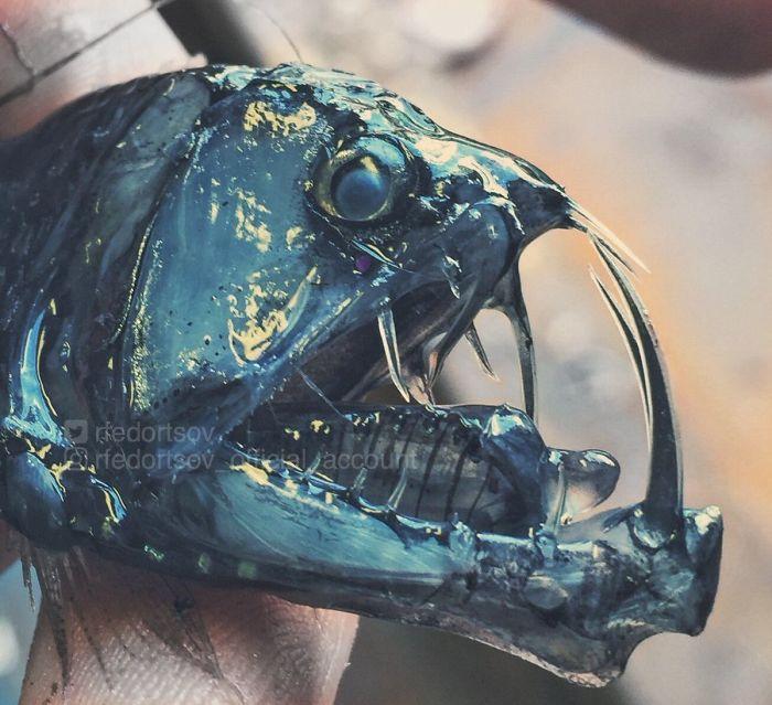 Роман Федорцов продолжает фотографировать ужасных глубоководных тварей