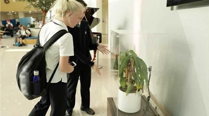 Любопытный эксперимент: чего можно добиться, оскорбляя растение
