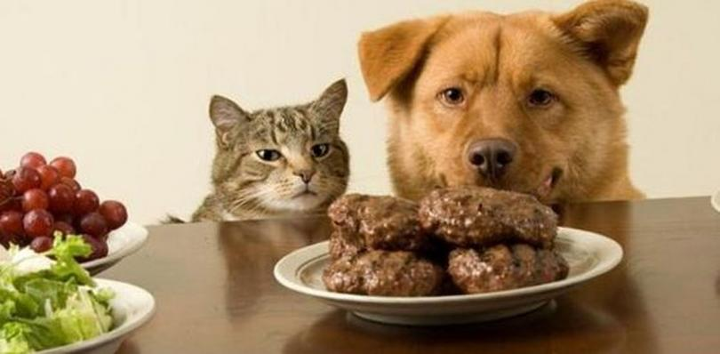 12 мифов о питании кошек и собак