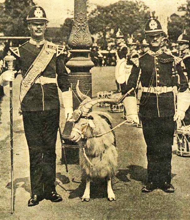 Козлы на службе в Британской армии