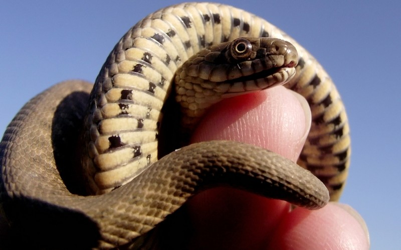 Самые распространенные мифы о змеях