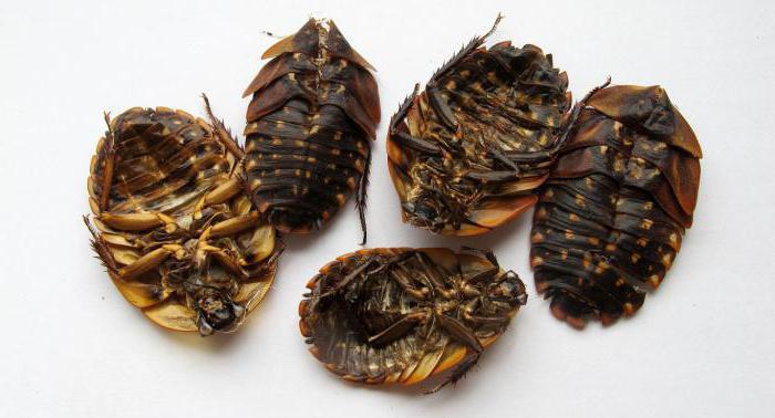 В Росконтроле рассказали, какие продукты содержат насекомых
