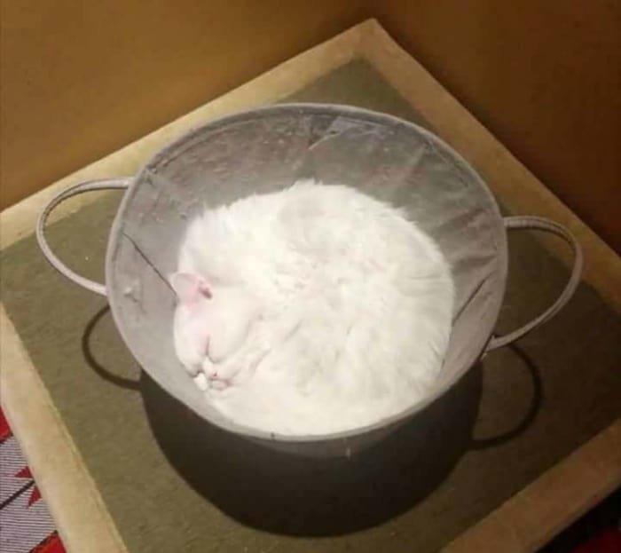 22 доказательства того, что кот - это жидкость