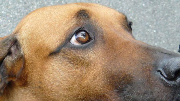 Ученые раскрыли секрет щенячьего взгляда