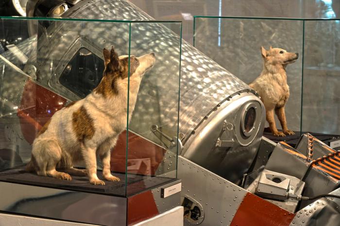 После смерти их чучела выставили в музее.  Фото: yandex.com.