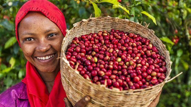 Родиной кофе считается Эфиопия