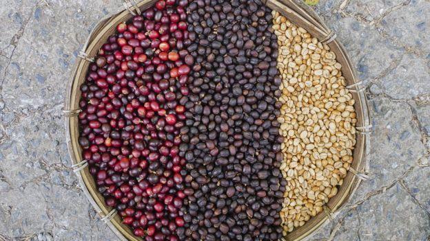 Зерна кофе — это жареные семена плода, называемого кофейной вишней