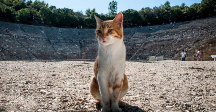 Борьба Ватикана с кошками