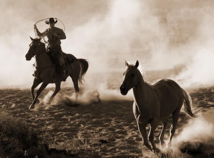 Ковбой на лошади / Фото: blog.stanis.ru