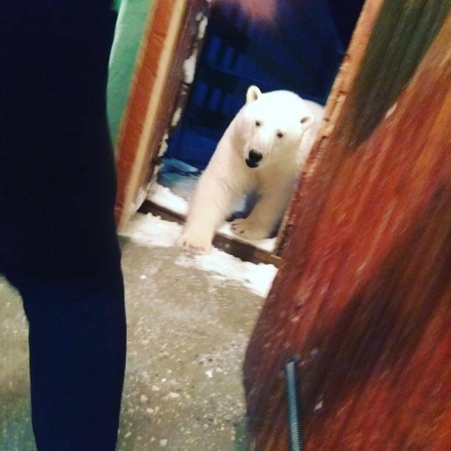 Эти фотографии шокировали Европу - нашествие медведей в Архангельской области (10 фото + 3 видео)