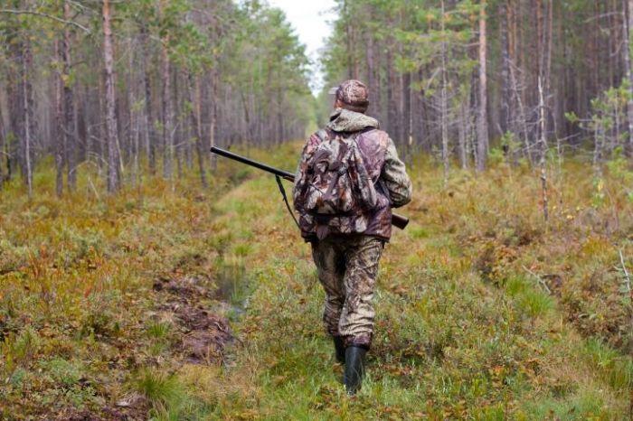 А в лесу без надобности. /Фото: tvoy-bor.ru.