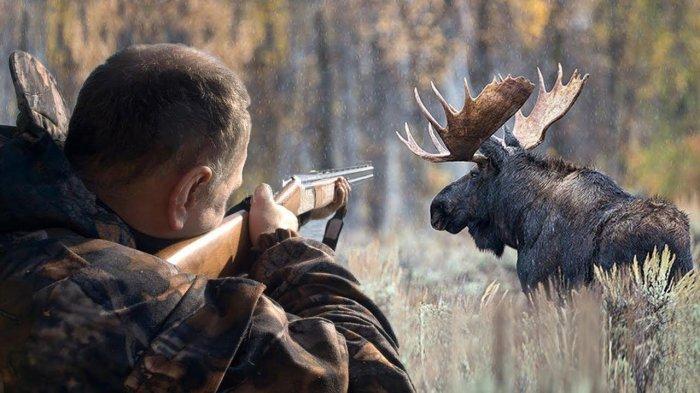 Чаще всего это гладкоствольное оружие. /Фото: change.org.