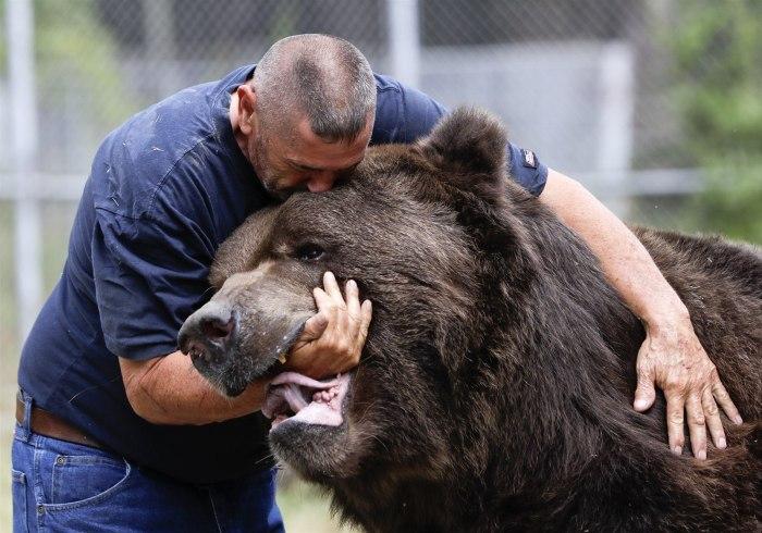 Медведь зверь опасный, даже если ручной. /Фото: yandex.by.