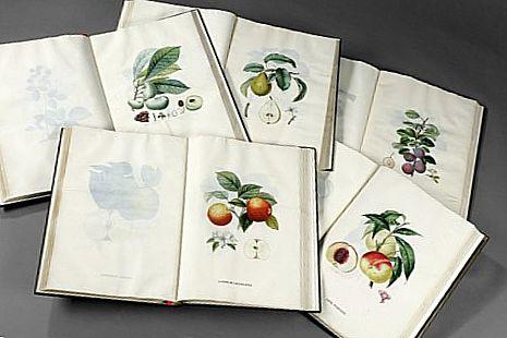 Трактат о плодовых деревьях