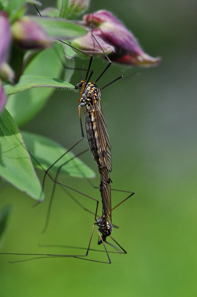 «Малярийный комар» - кошмар твоего детства Насекомые
