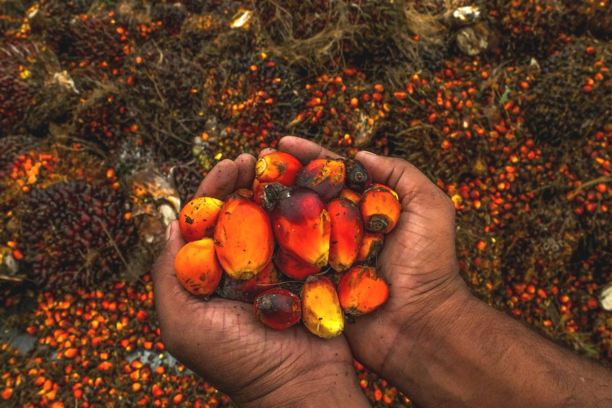4 мифа о пальмовом масле