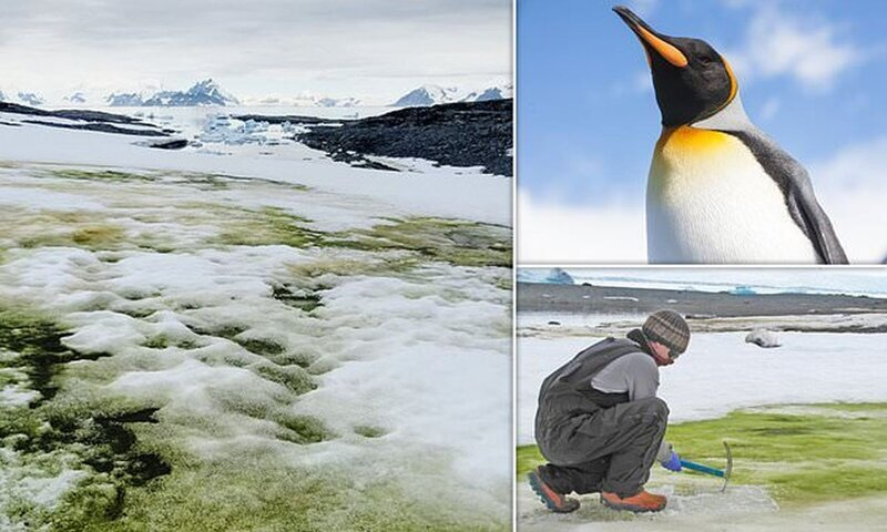 Антарктида стремительно зеленеет