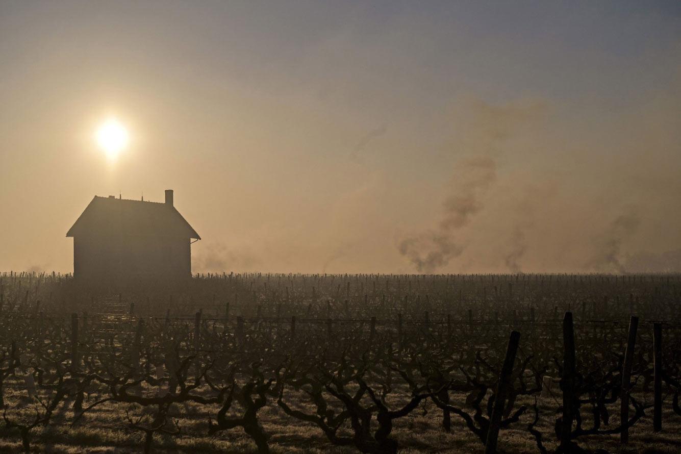 Как морозы уничтожили виноградники во Франции Франция