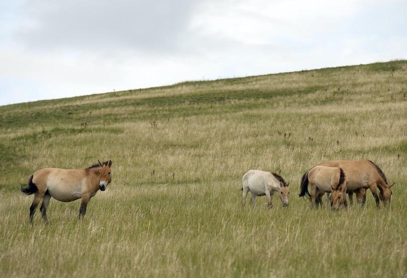 Что есть в Монголии Монголия