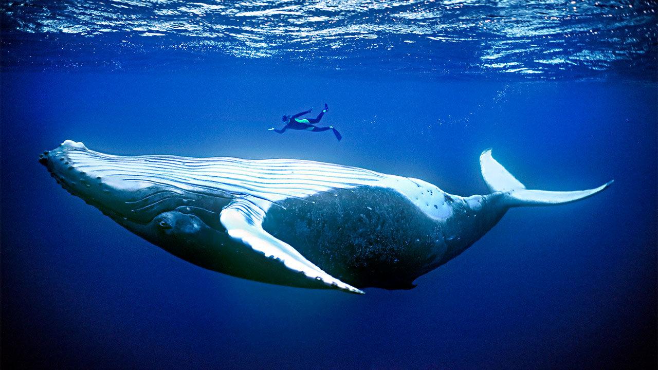 кит фото с людьми начала разберемся, почему