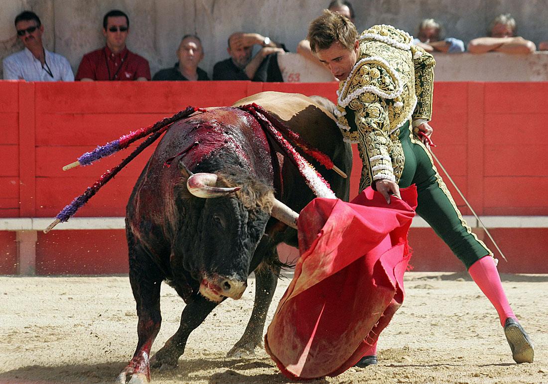 каждой борьба с быком картинки собак