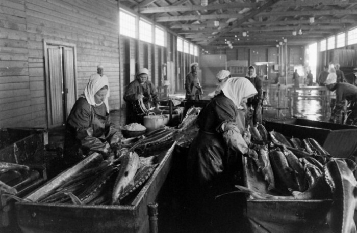 Коррупция была на всех этапах рыбной промышленности.