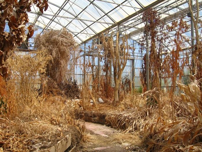 К концу эксперимента экосистема совсем пришла в упадок. /Фото: arpajournal.net