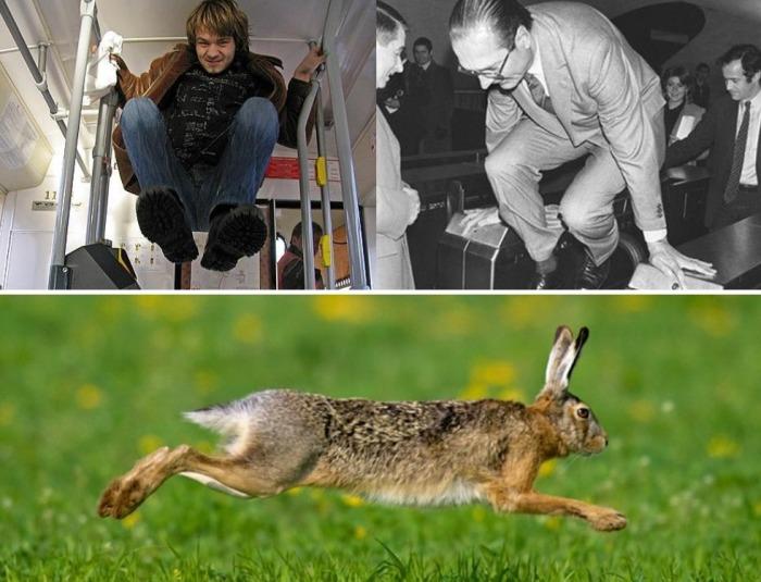 Безбилетники, как и зайцы, ловкие, прыгучие и быстрые / Фото: poznavaemoe.ru