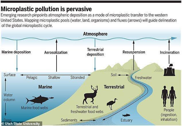 Экологи в США бьют тревогу: обнаружены микропластиковые частицы в дождевой воде