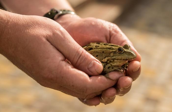 Этой страшилкой часто пугают детей, чтобы те не пытались поймать лягушку / Фото: laromakaro.livejournal.com