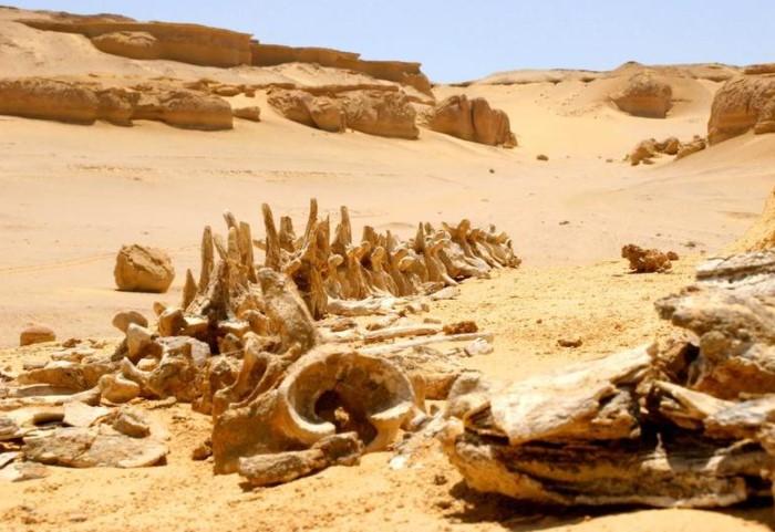 В Египте есть Китовая долина, в которой до сих пор сохранились окаменелости 15-метровых китов / Фото: travelask.ru