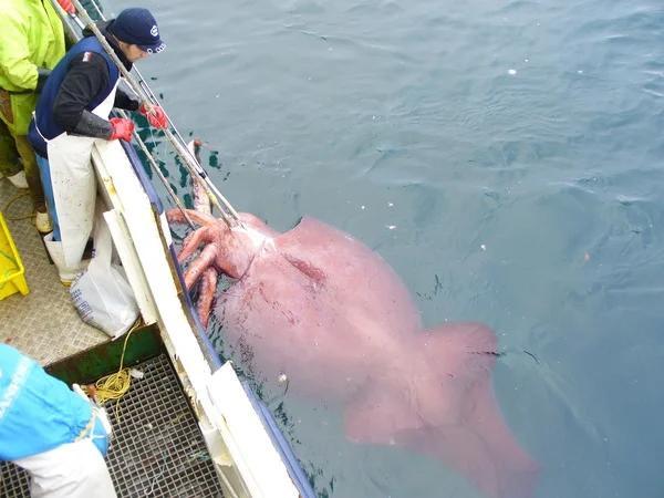 Мифы и правда о гигантских кальмарах Море