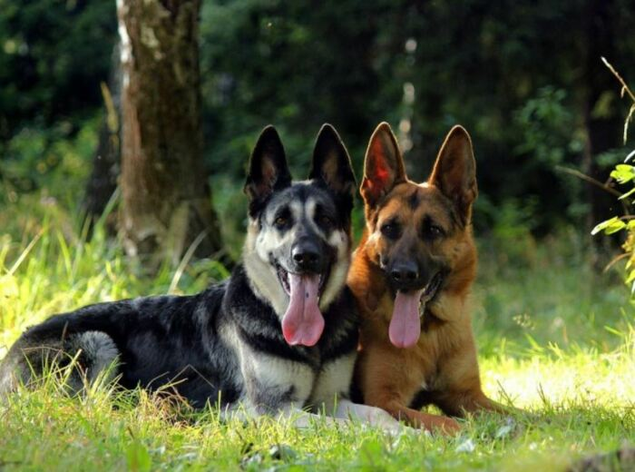 Выглядят собаки по-разному. /Фото: ya.ru.