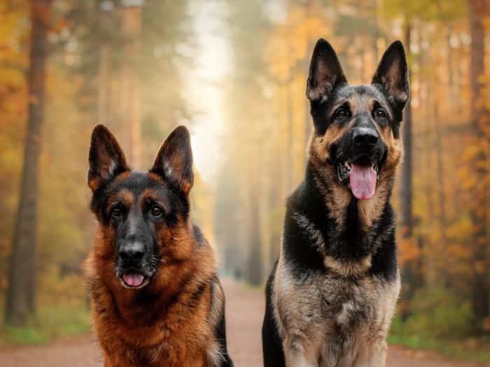 Удивительно, но немцы на самом деле спокойнее. /Фото: zastavki.com.