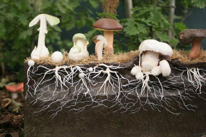 Грибы можно растить прямо в саду. /Фото: nashzelenyimir.ru.