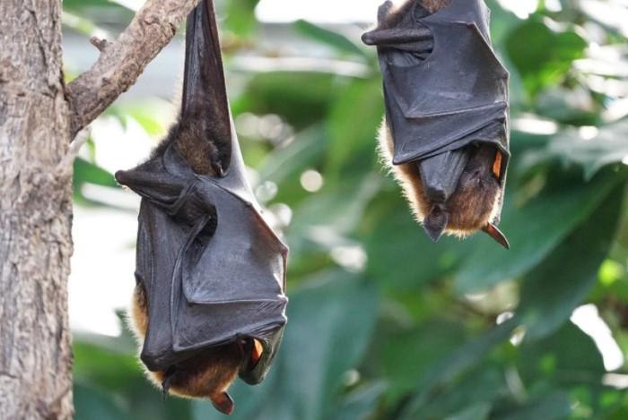 Многие летучие мыши отлично видят, а определенные виды даже способны улавливать лучи ультрафиолета / Фото: cdn.pixabay.com