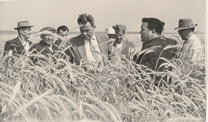 В восьмидесятых годах двадцатого столетия цены на нефть упали, поэтому импортировать зерно для СССР стало очень дорогой и непосильной ношей / Фото: kunayev.kz