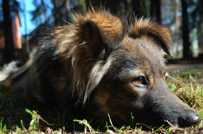 Так называли маленьких собачек. /Фото: photosight.ru.