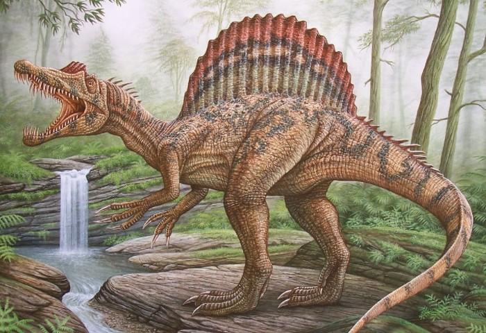 Спинозавр - крупнейший хищник, которого когда-либо обнаруживали ученые / Фото: live.staticflickr.com
