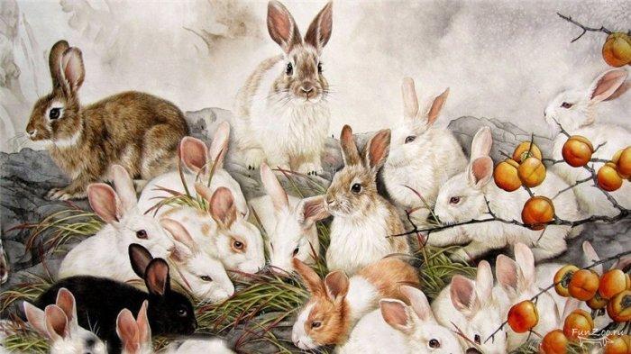 Считалось, что мясо кролика загрязняет не только тело, но и душу человека / Фото: funzoo.ru